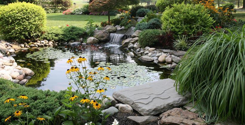 Oczko wodne czy zraszacz ogrodowy jaki typ nawodnienia wybrać?