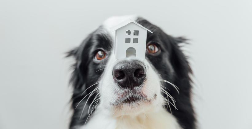 Hotel dla psów – jak wybrać dobry ośrodek na psi urlop?