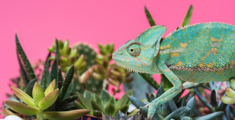 Egzotyczne zwierzęta – czy to dobry materiał na domowych pupili?