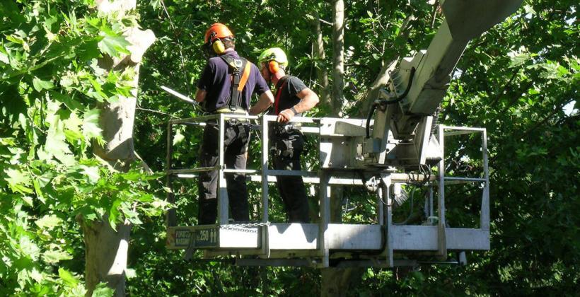Wycinka i cięcie drzew w ofercie firmy STOL-TRAK