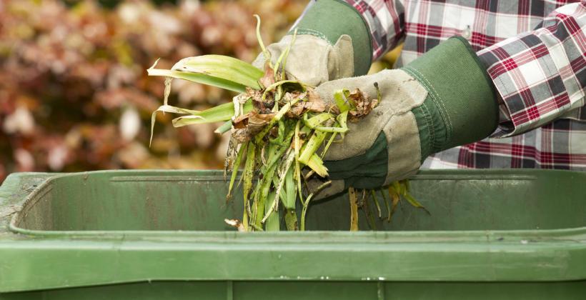 Porządki w ogrodzie – co zrobić z odpadami zielonymi?
