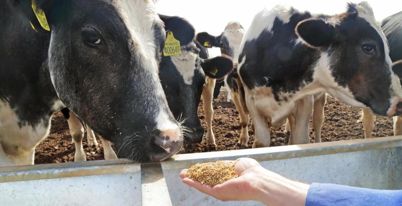 Aromaty jako niezbędne i zróżnicowane dodatki do pasz dla zwierząt hodowlanych