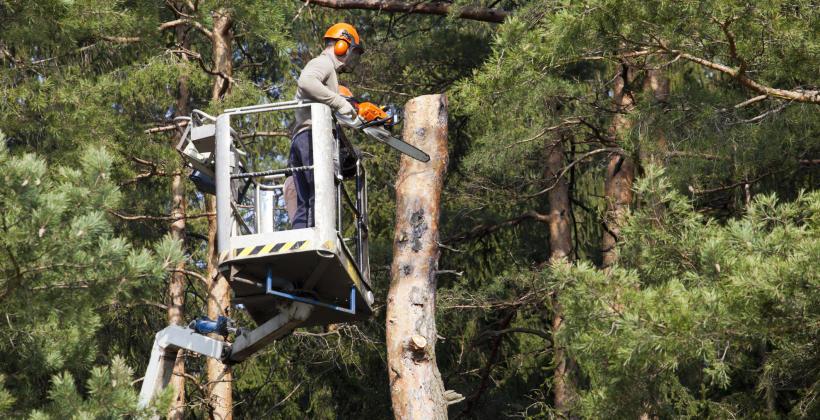 Jak możemy poradzić sobie z wycinką drzew? Poznaj metody!