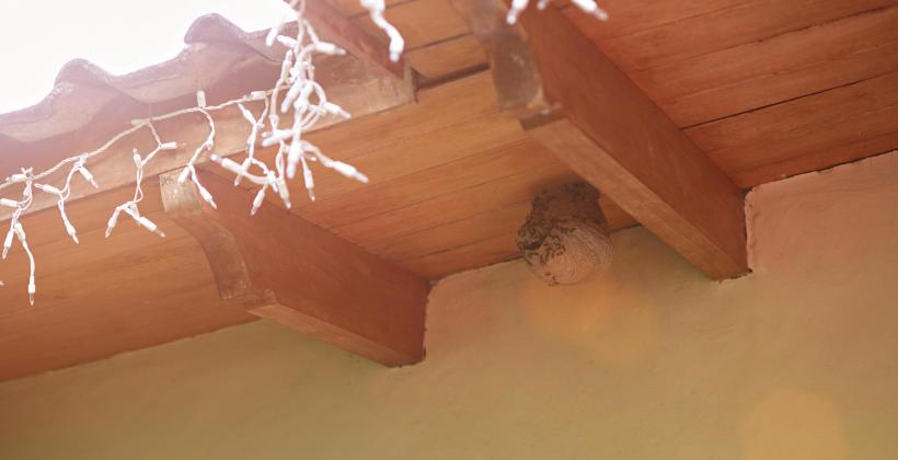 Jak usunąć gniazda os i szerszeni w bezpieczny sposób?