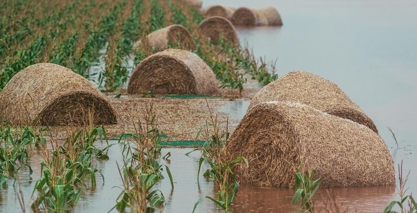 Jak wybrać dobre ubezpieczenie rolne?