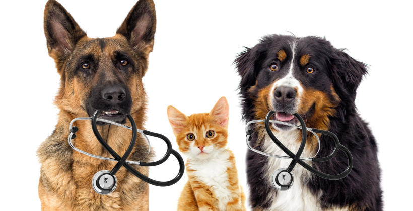 Profilaktyka zdrowia Twojego czworonoga! Zadbaj o zdrowie psa