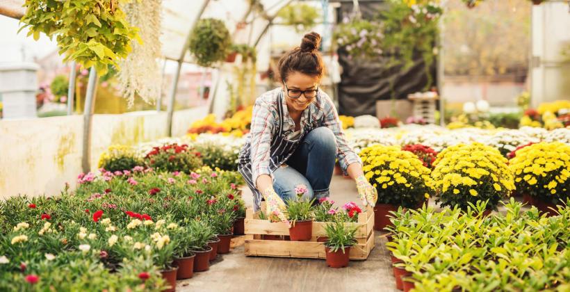 Rośliny dostępne w ofercie dobrego gospodarstwa ogrodniczego