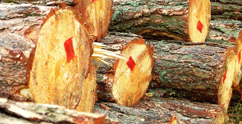 Co oferują dobre zakłady przetwórstwa drewna?