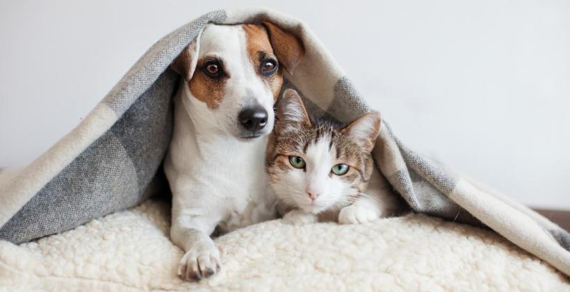 Dlaczego warto zaczipować psa lub kota?