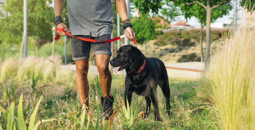 Jak nauczyć psa chodzenia na smyczy?