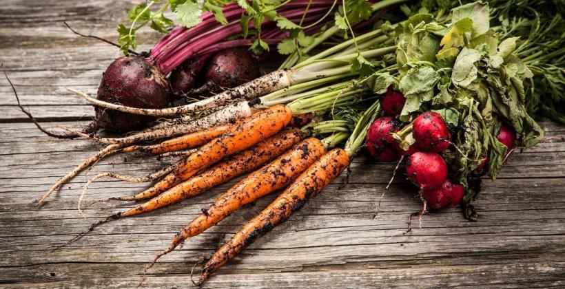 Przydomowy warzywnik – warzywa proste w uprawie