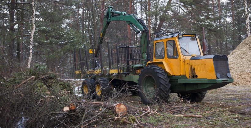 Na czym polega karczowanie, wycinanie i frezowanie pni drzew?