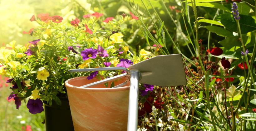 Jak sadzić zioła w domu?