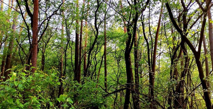 Co mieści się w zakresie usług leśnych?