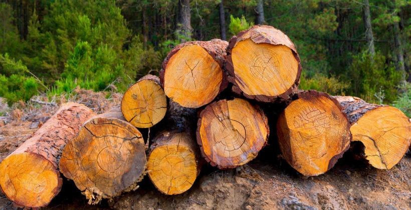 Zasady bezpiecznej wycinki drzew