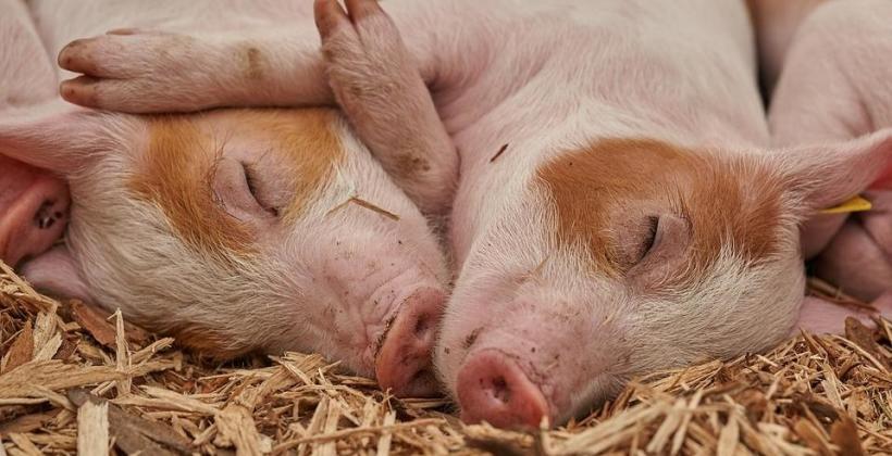 Sklep rolniczy z produktami dla zwierząt gospodarczych