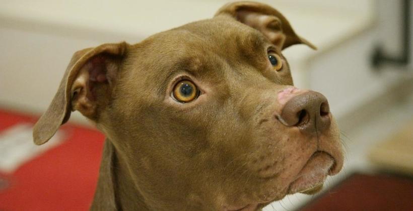 Pies też człowiek, czyli jak prawidłowo zadbać o czworonożnego przyjaciela