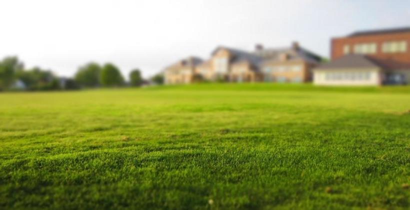 Rodzaje trawy do wysiania trawnika