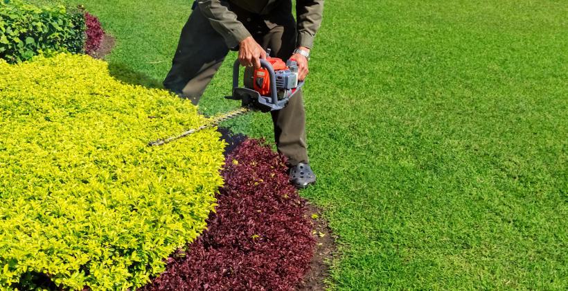 Jak profesjonalnie przycinać krzewy?