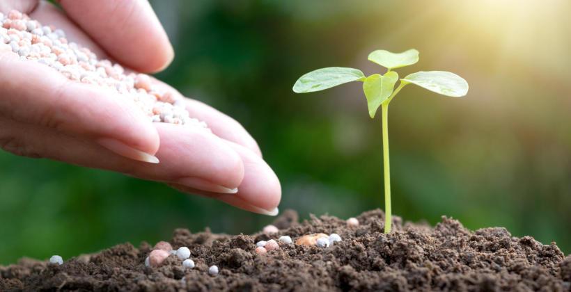 Jak właściwie dobrać nawóz do roślin i o nie zadbać?