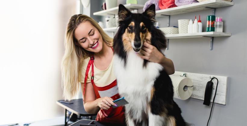 Kim jest groomer i ile zarabia psi fryzjer?
