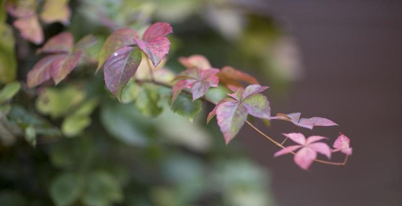 Jak pielęgnować drzewa w swoim ogrodzie?
