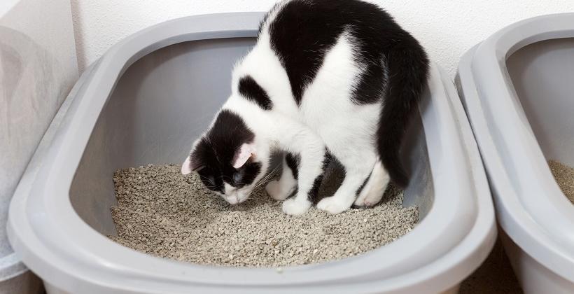 Żwirek dla kota. Jego rola i znaczenie