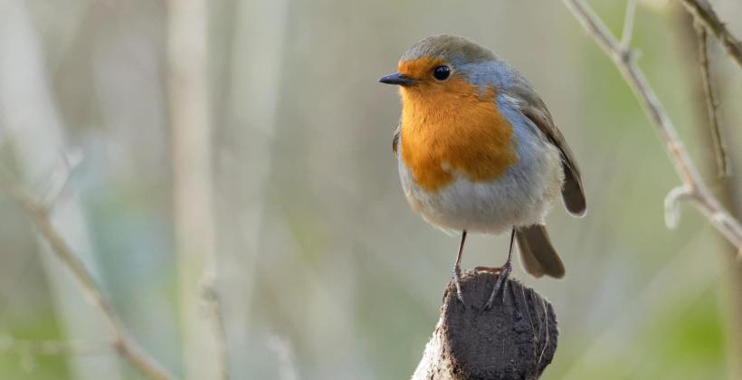 Ekspertyza i nadzór ornitologiczny