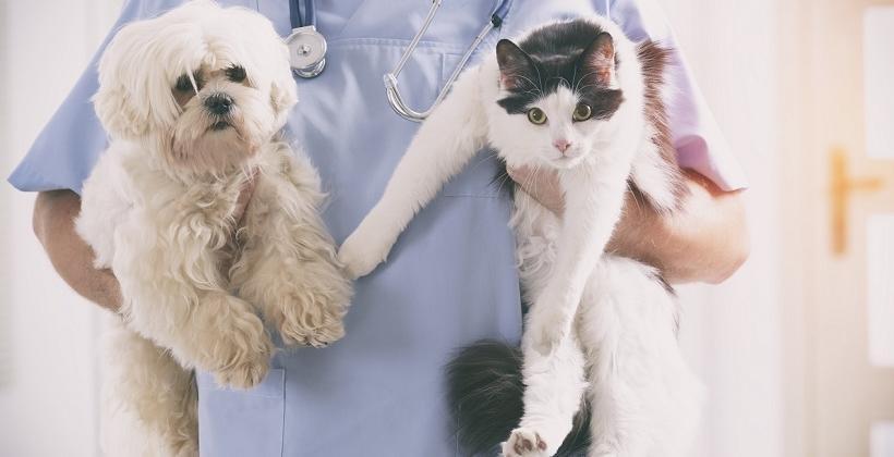 Odrobaczanie psów i kotów