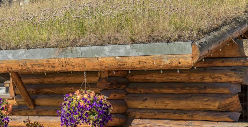 W jaki sposób pielęgnować dach zielony wykonany w ekstensywnym systemie?
