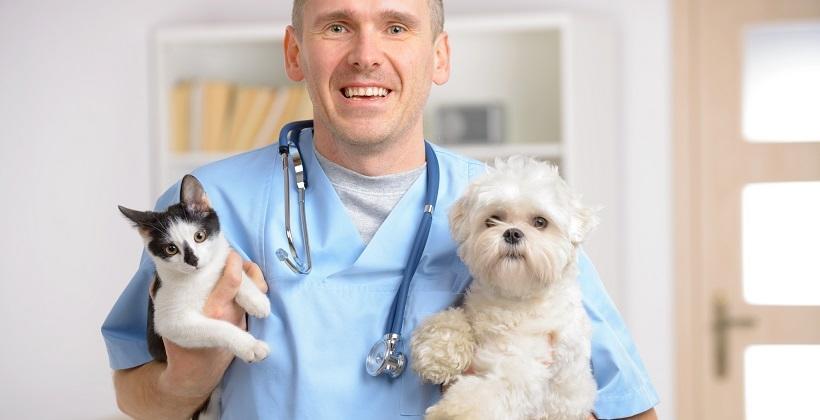 Zasadność kastracji i sterylizacji zwierząt