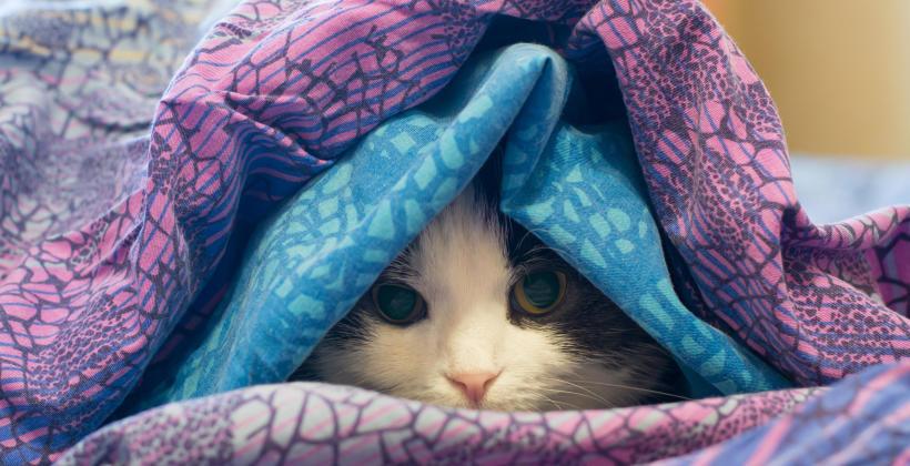 Na co chorują koty?