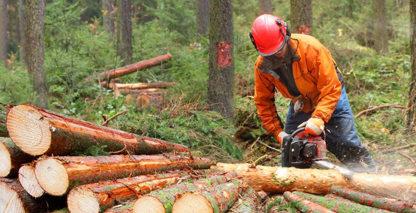 Wycinanie i karczowanie drzew i krzewów - co warto wiedzieć?