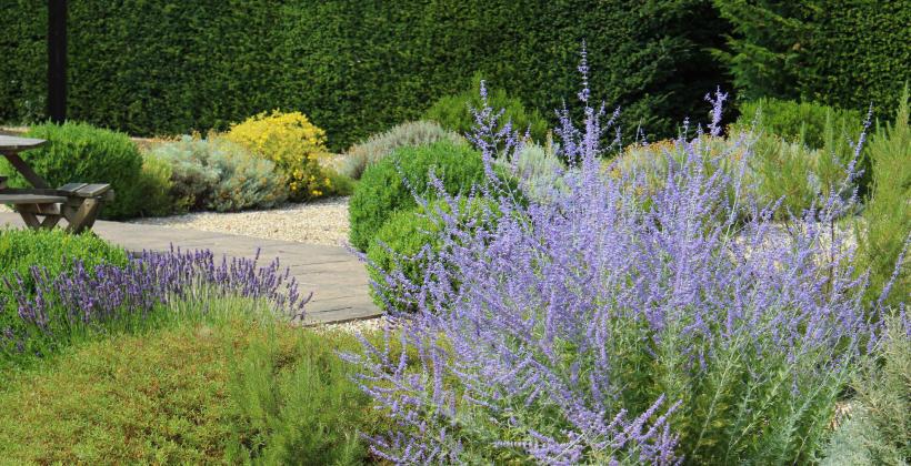 Ogród żwirowy – niebanalny wygląd i łatwość w pielęgnacji roślin.