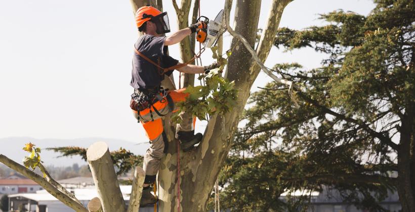 Jakie są rodzaje wykonywanych cięć drzew i krzewów?