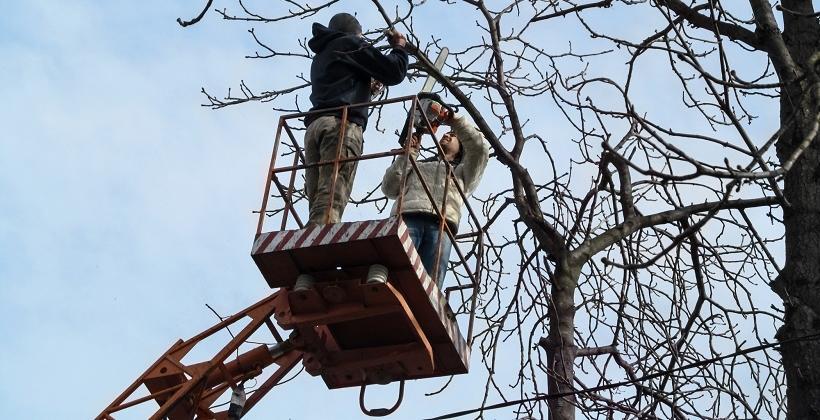 Podnośniki, a wycinka i pielęgnacja drzew