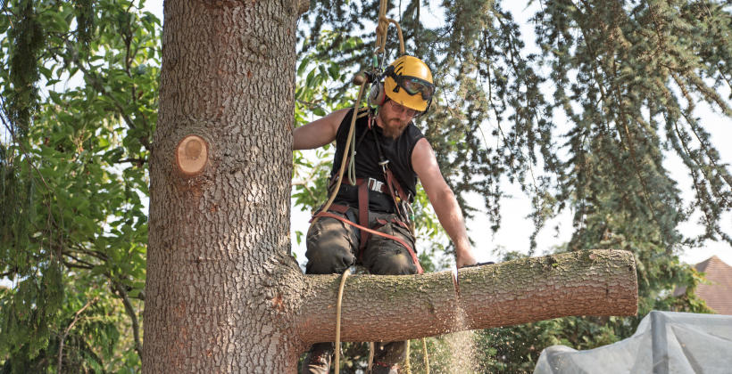 Usługi alpinistyczne- gdzie znajdują zastosowanie?