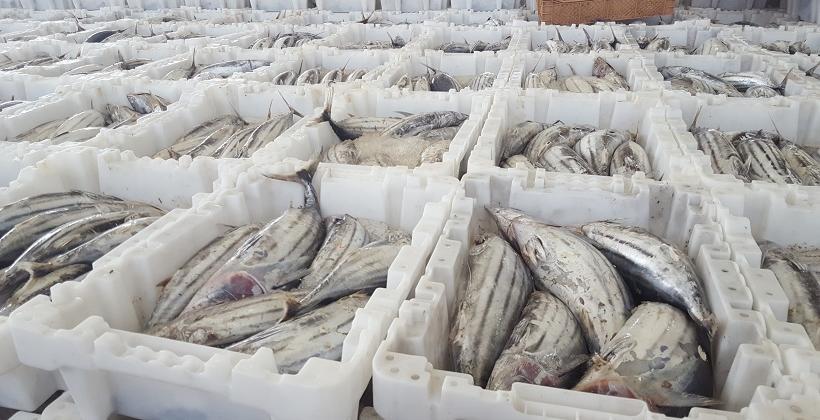 Chłodnie w przetwórstwie rybnym. Charakterystyka