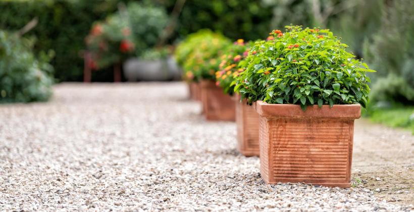 Przydomowy ogród – dlaczego warto postawić na profesjonalny projekt?