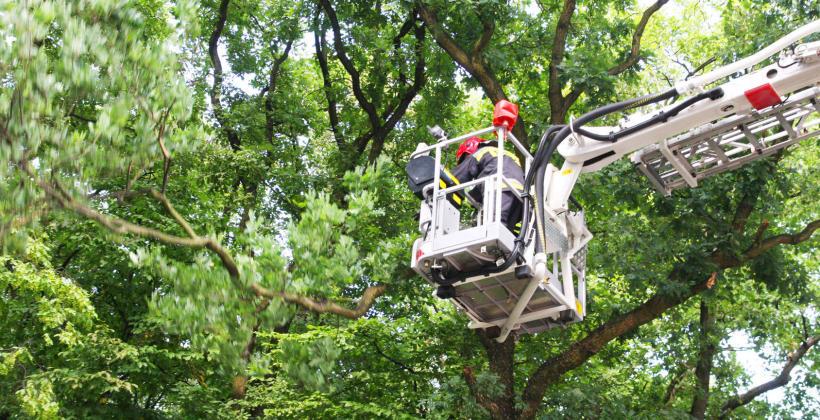 Co należy wiedzieć na temat metod wycinania drzew?