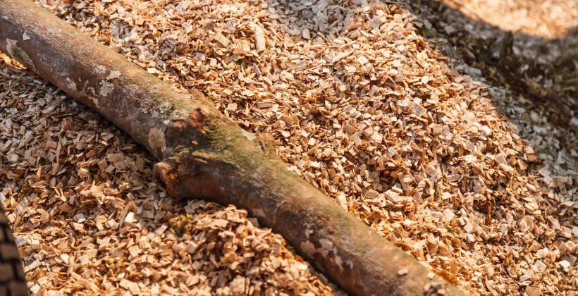 Zastosowanie zrębki drzewnej w ogrodnictwie