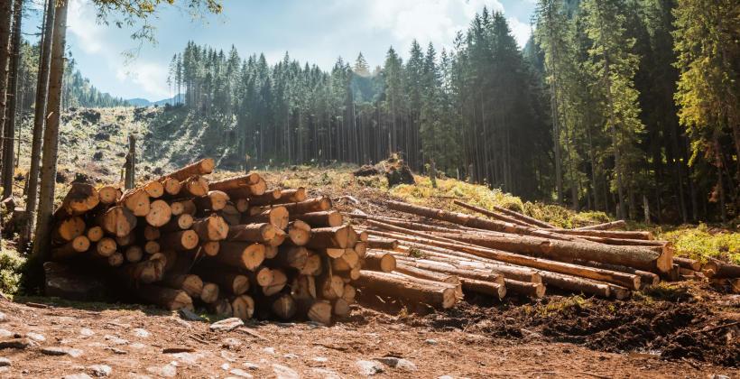 Czym jest zrywka drewna i jak się ją wykonuje?