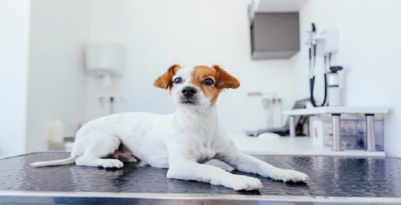 Problemy behawioralne psa. Jak skutecznie je rozwiązać?