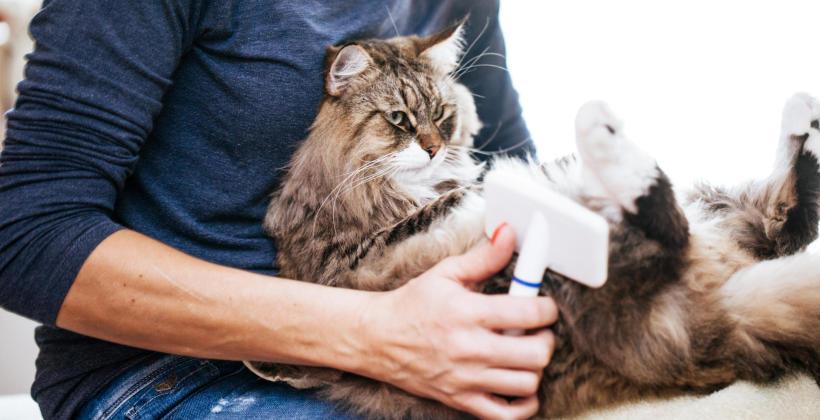 Jak zadbać o sierść długowłosego kota?