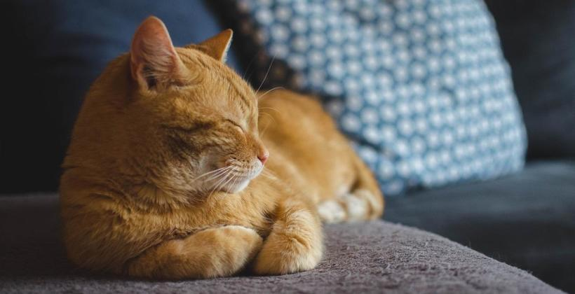 Jak wygląda zabieg sterylizacji kotów