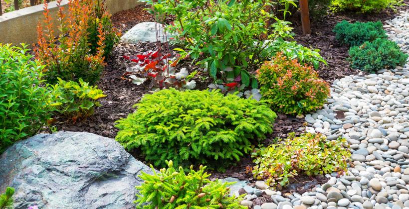 Jakie są popularne rodzaje kamieni dekoracyjnych do ogrodu?