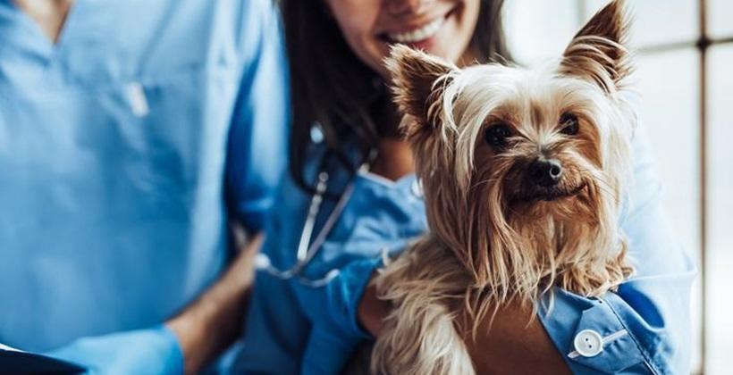 Czipowanie psa - przebieg, wskazania i cena zabiegu