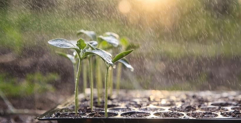 Jak pozyskiwać deszczówkę w ogrodzie?