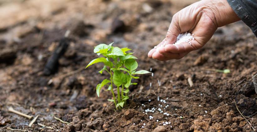 Czym charakteryzują się mineralne nawozy rolnicze?
