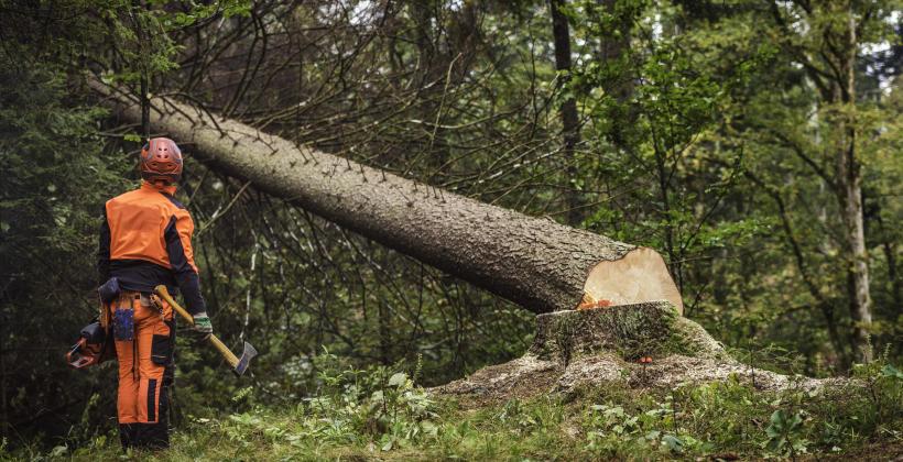 Co należy wiedzieć o wycince drzew?